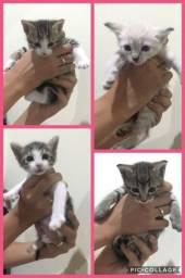 Doam-se 2 gatinhos machos (2 meses de vida)