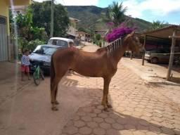 Vende cavalo marcha batida