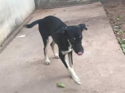 Doação de cachorro fêmea