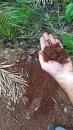 Arrendo 4.000 Há Lavoura - Sul do Pará
