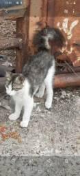 Adoção de gatos.