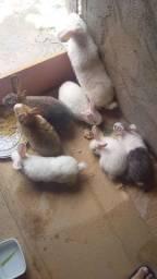Lindos filhotes de coelhos.