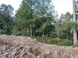 Gramado - Terreno Padrão - Dutra