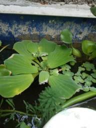 Vendo plantas aquáticas