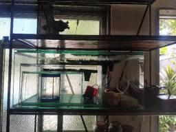 3 aquarios uma beteira, 6 bombas de ar, um aquecedor quem levar tudo junto faço desconto