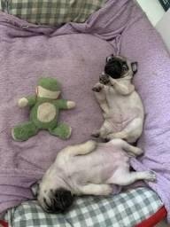 Pug Linda?s