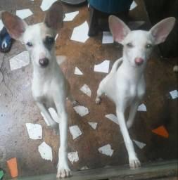 Cachorrinhas para doação