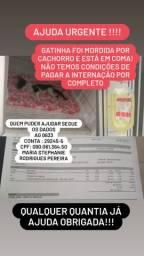 Gatinha Farol precisa de ajuda URGENTE