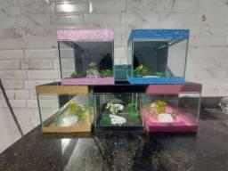 Diversos aquário para BETA Distribuidora!!
