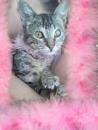 Doação linda gatinha filhote castradinha