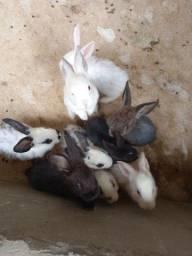 Título do anúncio: Vendo coelhos e porquinhos da Índia