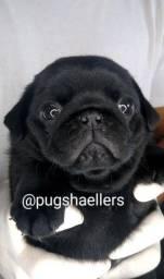 Título do anúncio: Lindos filhotes de Pug Disponíveis
