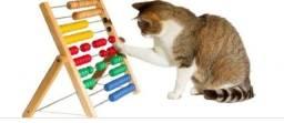 Guia de adestramento de gatos