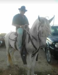Cavalo: raça mangalarga machador
