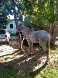 Vendo cavalo MM com QM