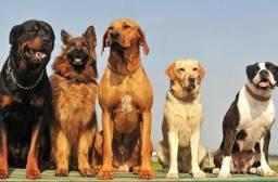 Procuro cachorro para adoção porte grande