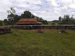 Sítio à venda, 21 alqueires- Zona Rural - Nova Brasilandia/RO