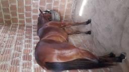 Égua só domada com 3 anos. zap *