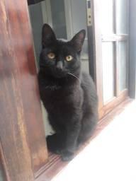 Título do anúncio: Adoção responsável de gato