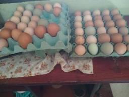 Ovos e pintinhos