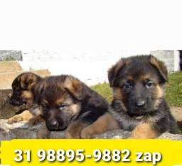 Título do anúncio: Canil Filhotes Cães Diferenciados BH Pastor Golden Akita Boxer Labrador Dálmata