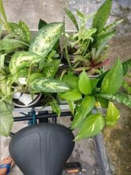 Plantas Variadas (Jardinagem)