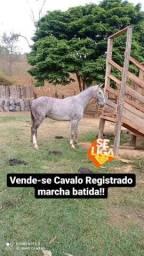 Título do anúncio: Cavalo registrado mangalarga