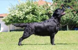 Labradora
