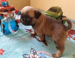 Título do anúncio: Filhotes de cachorro raça Pug