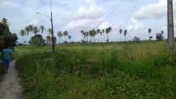 Fazenda de criação de Camarão- Carcinicultura