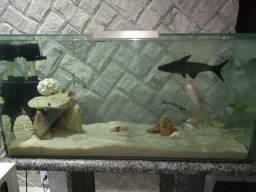 Vendo aquário super completo leia