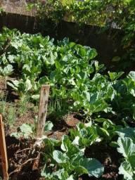 Horta:Couve, Alface e Cebolinha