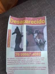 Esse cachorro fugiu aqui do Marcos Freire ll por favor quem encontra me ligue por favor
