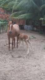Vendo égua e filha.