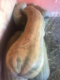 Abóbora seca rajada