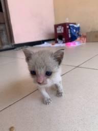 Doa-se gatinha em Castanhal