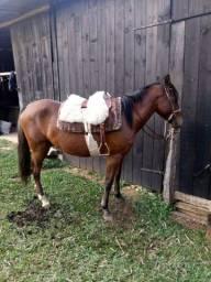 Título do anúncio: Cavalo de montaria
