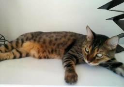 Gato perdido em Nova Viçosa, pago 100 reais