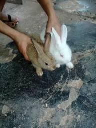 Um casal de coelhos