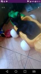 Doação de filhotes de gatos URGENTE