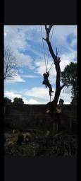 Título do anúncio: Corte de árvores remoção dos entulhos roçagem