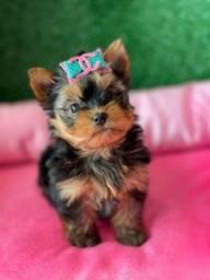 Título do anúncio: Belíssima Yorkshire mini  !!!! O presente Q Encanta