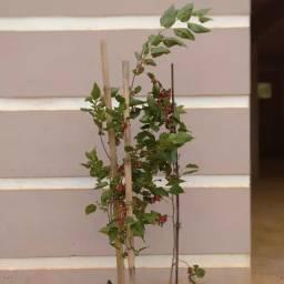Plante natureza