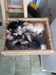 Gatos para adoção em Itaoca Praia