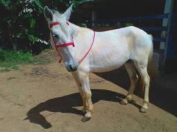 Vendo cavalo manso mm