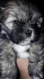 Cachorro super carinhoso