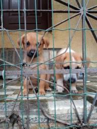 Título do anúncio: Cachorro porte pequeno para adoção