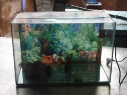 Aquário de 20 litros para peixes, com a Bomba