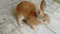 Doa se coelho