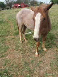 Égua mansa 5 anos